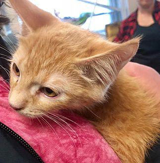 Adopt A Pet :: Conan  - Edmonton, AB