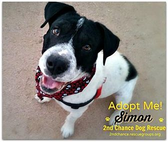 Second Chance Dog Rescue Queen Creek