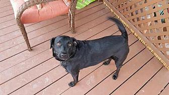 Adopt A Pet :: Della  - Phoenix, AZ