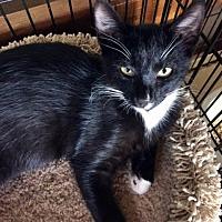 Adopt A Pet :: Alexie - Santa Fe, NM