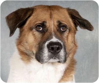 Adoption A Dog In Houston