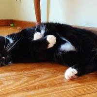 Adopt A Pet :: Chili Pie - New Freedom, PA