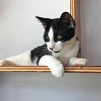 Adopt A Pet :: Conway - St. Louis, MO