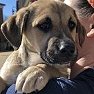 Adopt A Pet :: Cutie Jack