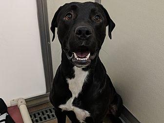Adopt A Pet :: Zeus  - Laramie, WY