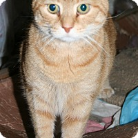 Adopt A Pet :: Rosie (COURTESY POST) - Baltimore, MD