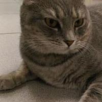 Adopt A Pet :: Arabelle - New York, NY