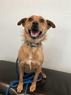Adopt A Pet :: Lina  - Renton, WA