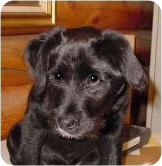 Rupert Id Wirehaired Fox Terrier Meet Ruger A Pet For Adoption