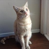 Adopt A Pet :: Cody - Long Beach, CA