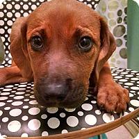 Adopt A Pet :: Sierra - Tampa, FL