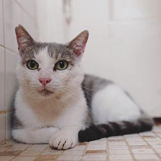 Adopt A Pet :: Barley  - BROOKLYN, NY