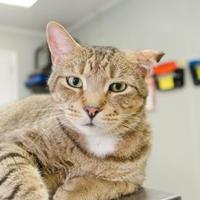 Adopt A Pet :: Edgar - New Freedom, PA