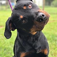 Adopt A Pet :: Bubba - Fort Valley, GA