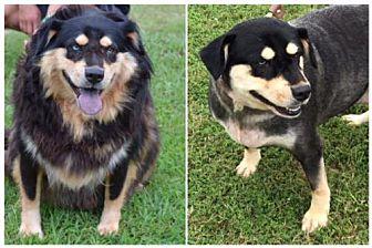 Adopt A Pet :: Corina  - Woodstock, GA