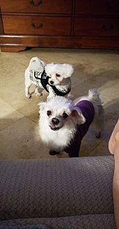 Adopt A Pet :: Butters & Honey  - Renton, WA