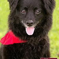 Adopt A Pet :: Bobby - Marina del Rey, CA
