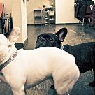 Adopt A Pet :: Wilma & Betty