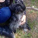 Adopt A Pet :: Selene