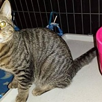 Adopt A Pet :: Butch - Iroquois, IL