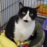 Adopt A Pet :: Swirl - Winona, MN