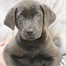 Adopt A Pet :: Rhea Moon