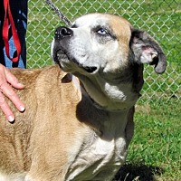 Boxer Dog for adoption in Batavia, Ohio - Jada
