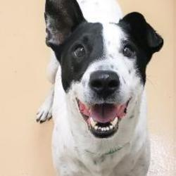 HALO Animal Rescue - Deer Valley PetSmart Adoption Center in Phoenix
