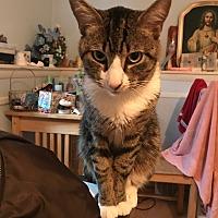 Adopt A Pet :: Momo (COURTESY POST) - Baltimore, MD
