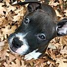 Adopt A Pet :: Pretty Paisley RBF