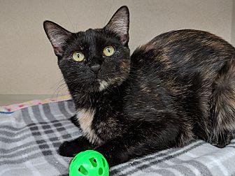 Adopt A Pet :: Arti  - Laramie, WY