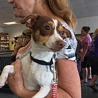 Adopt A Pet :: Cuddles - Willows, CA