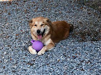Adopt A Pet :: Charlie  - Snow Hill, NC