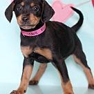 Adopt A Pet :: Blake