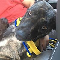Adopt A Pet :: Magnolia - New York, NY