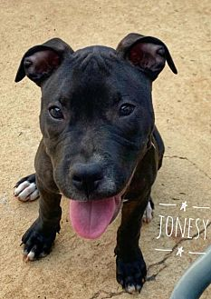 Adopt A Pet :: Jonesy  - Mobile, AL