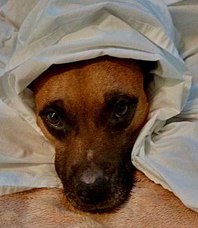 Adopt A Pet :: Charlie's Angel  - Ft Myers Beach, FL