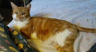 Adopt A Pet :: Anastasia  - Mt Vernon, IN