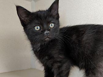 Adopt A Pet :: Molly  - Laramie, WY