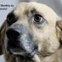 Adopt A Pet :: Diogee (D O G) - Jackson, MS