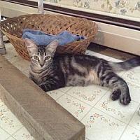 Adopt A Pet :: Trixie - Hudson, NY