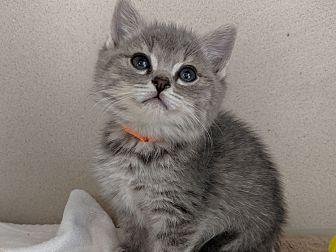 Adopt A Pet :: Stacie  - Laramie, WY