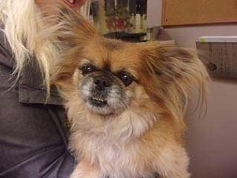 Adopt A Pet :: Prince Charles  - Princeton, WV