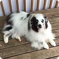 Adopt A Pet :: Oreo - Minneapolis, MN