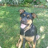 Adopt A Pet :: Lucy - West Hills, CA