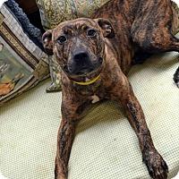 Adopt A Pet :: Breeze - Toledo, OH