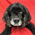 Adopt A Pet :: Fabio