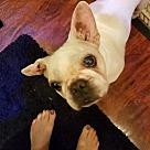 Adopt A Pet :: Eliza