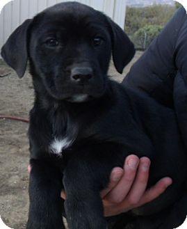 Corona Ca German Shepherd Dog Meet Farmers Market Pups G A Pet