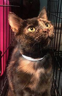 Adopt A Pet :: Jasmine  - Devon, PA